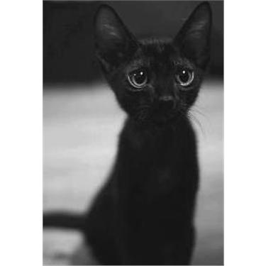 Black Cat Awareness Day