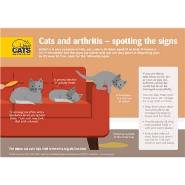 Cats and arthritis: how to spot the signs