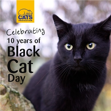 Cat lovers celebrate 10 years of Black Cat Day