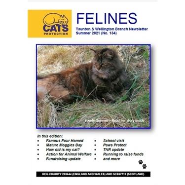 Felines Newsletter Summer 2021