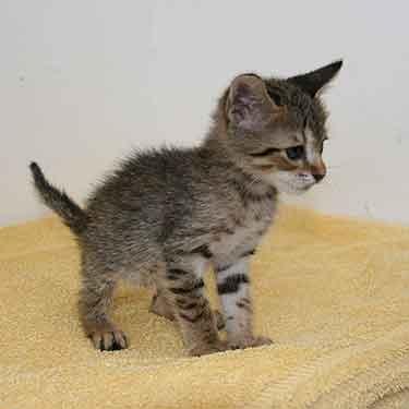 Happy ending for stowaway kitten Paella