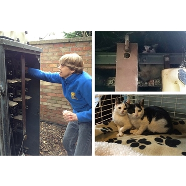 Dramatic kitten rescue by Cambridge Cats Protection from live electricity substation