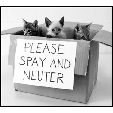 Neuter and chip for £5 is back!
