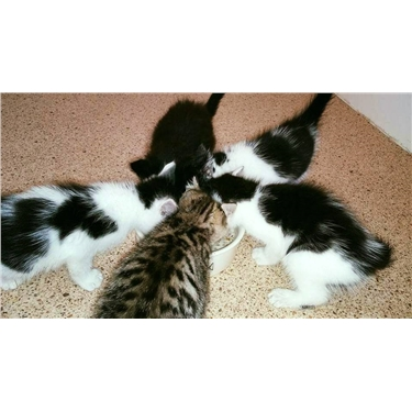 Kittens Dumped!