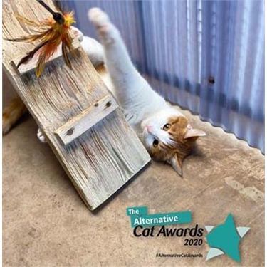 Alternative Cat Awards