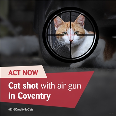 Air Gun Attack: Coventry