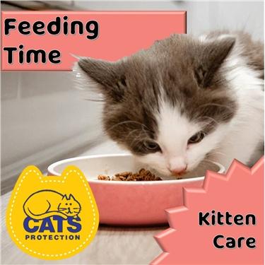 Kitten Care: Feeding Time