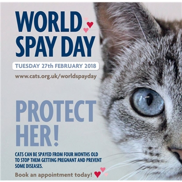 WORLD SPAY DAY - PROTECT HER - 27TH FEBRUARY 2018