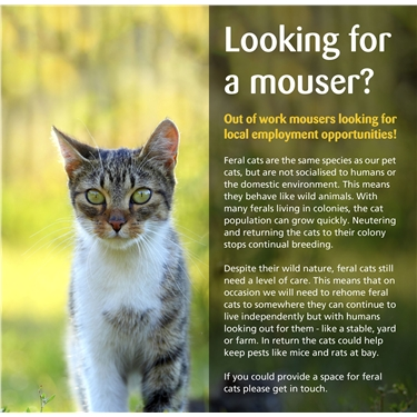 Out of Work Mousers Looking for Local Employment Opportunities!