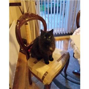Skegness & District branch help reunite long-lost cat from Yorkshire