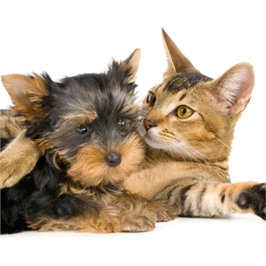 Introducing a new dog to your cat