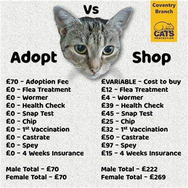 Adopt vs Shop