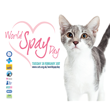 Cats Protection joins forces with animal charities for World Spay Day