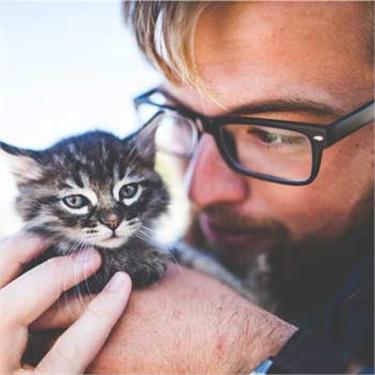Cat ownership increase in men, says survey