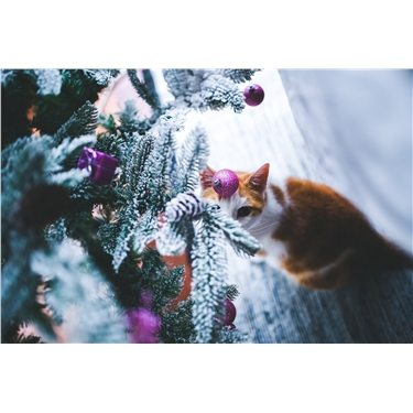 Having a merry, safe Christmas with your cats