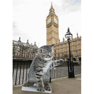 Cats Protection urges Westminster candidates to back five-year feline welfare agenda ahead of General Election
