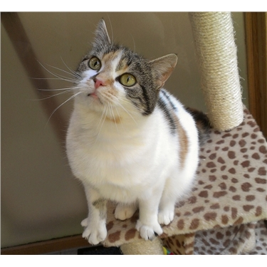 Featured Cat of the Month January 2018