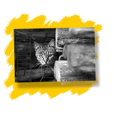 Feral cats - an urgent appeal for homes