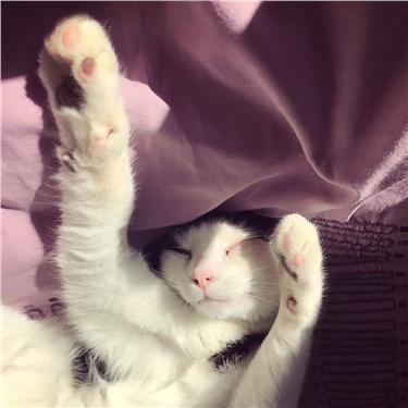 Gateshead Branch seeks cat-loving volunteers