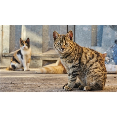 Understanding what Feral Cats are