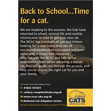 Back to school... Time for a cat