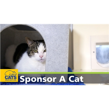 Become a cat sponsor