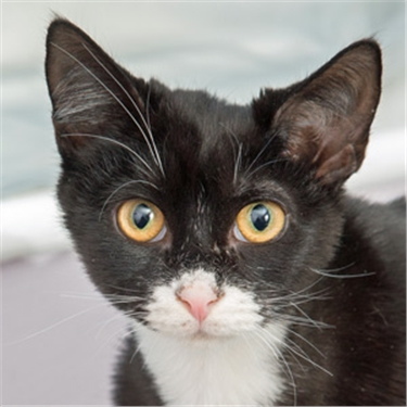 Kitten with fused jaw on the mend after life-saving op