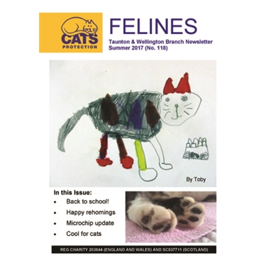 Felines Newsletter Summer 2017