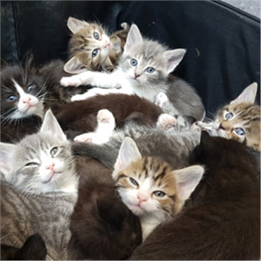 Fifteen tiny kittens found dumped in suitcase recovering with Cats Protection