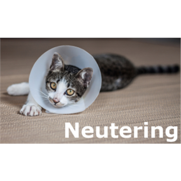 Help with neutering your cat
