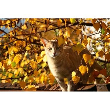 Fram & Sax News and Cat Care November 2018