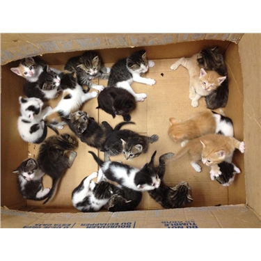 August to October 2016 Neutering Campaign