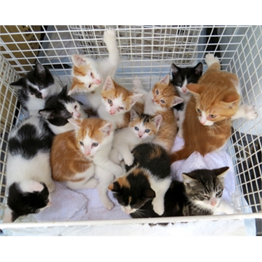 Kitten Fosters required