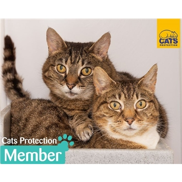 Become a Cats Protection Member today and support our branch