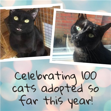Celebrating 100 Cats & Kittens Adopted In 2020