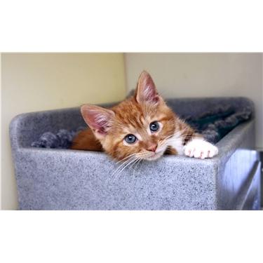 Cat and Kitten Adoptions