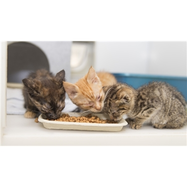 Bridgend appeal for neglected kittens