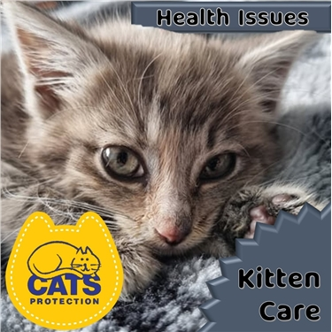 Kitten Care: Health Issues