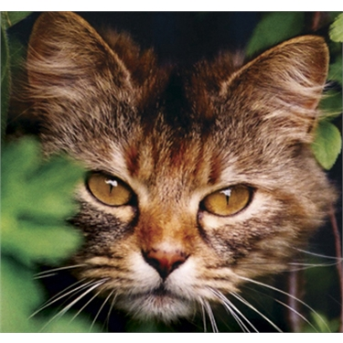 Feral Cats looking for rural opportunities in this area