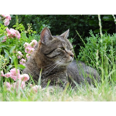 Top tips to keep your cat safe in the garden this summer