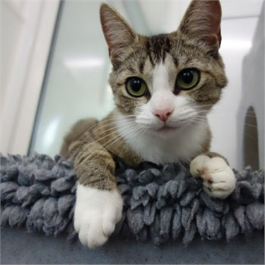 Cats Protection seeks a home for cat with super-sized paws!