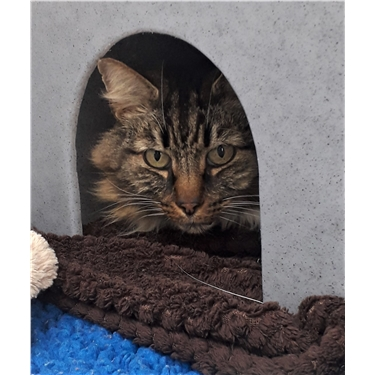 Meet Wilson our sponsor cat