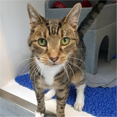 Sneezy cat Elliott looking for caring new home