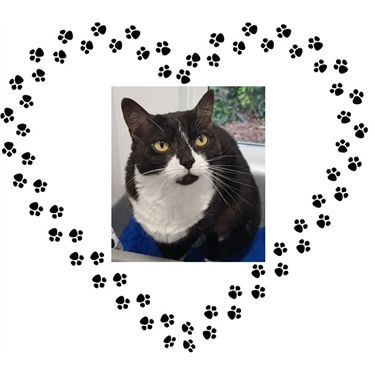 Kitty of the Week - Taz!