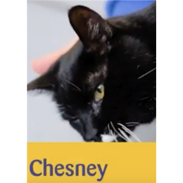 Meet Chesney