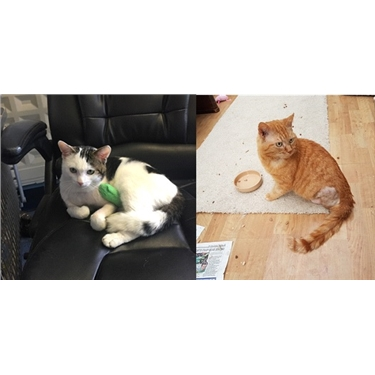 Help us put some cash in the kitty to help with the veterinary care required for Rupert and Weasley