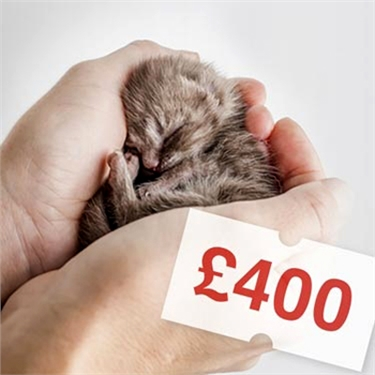 Cats Protection is calling for a change in the law to prevent the sale of sick and under age kittens