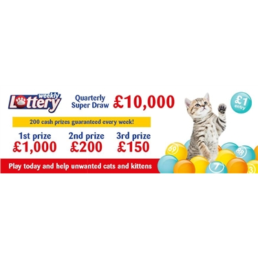 Play Cats Protection Lottery to help unwanted cats and kittens!