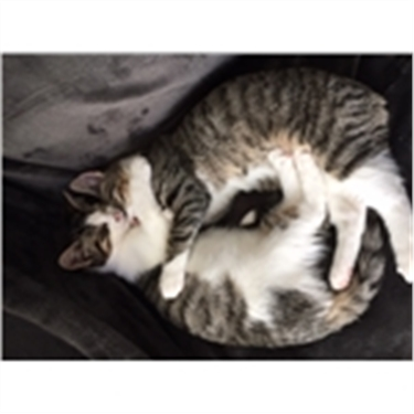 Success Story - kittens abandoned = now rehomed