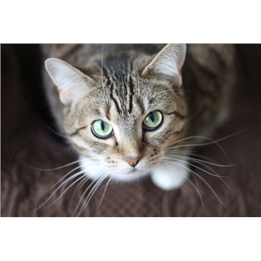 Food standards agency - Catfood recall